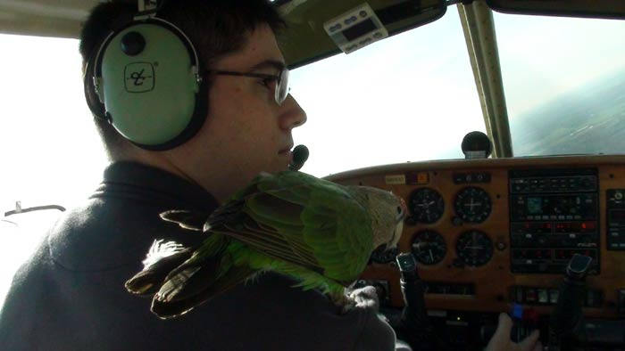 Parrot Flying Aboard Airplane