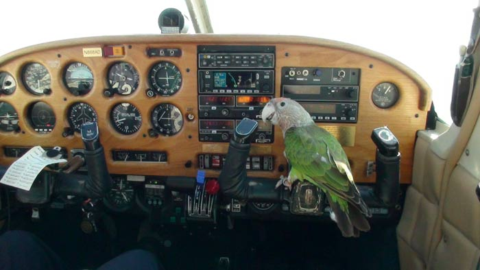 Parrot Flying Airplane