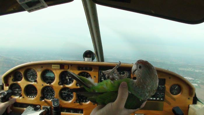 Parrot on Back in Airplane