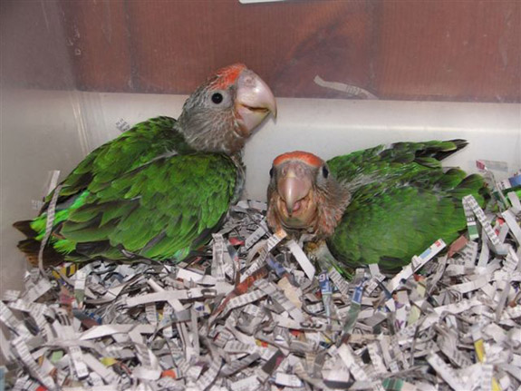 Trained Parrot Blog -