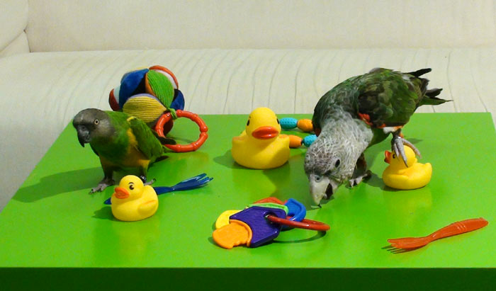 Baby toy for parrot