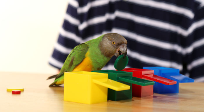Parrot Color Match