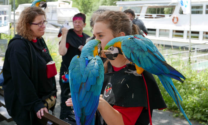 Blue and Gold Macaws in Germany