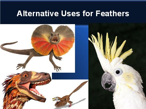 Alternative uses for feathers