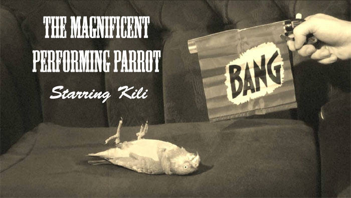 The Magnificent Performing Parrot Starring Kili