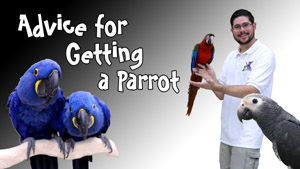 Advice for Getting a Parrot