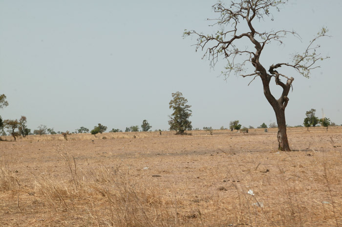 African Woodland Savannah