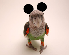 Parrot Joke Ears