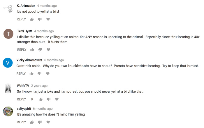 Youtube Comments about parrots having sensitive hearing