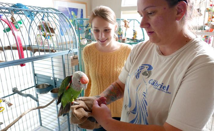 Cape Parrot at the Gabriel Foundation