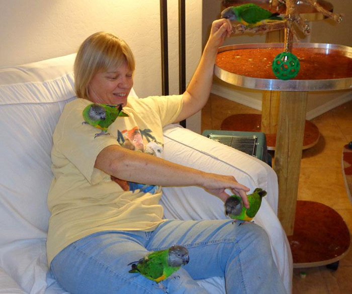 Ginger playing with Senegal Parrots