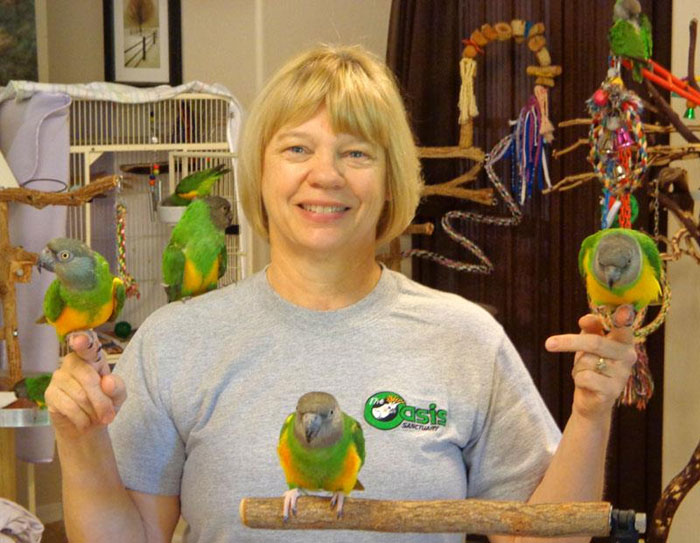 Many Rescue Senegal Parrots