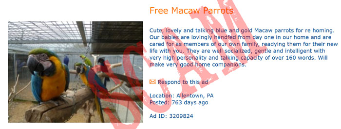 Free Parrot Scam