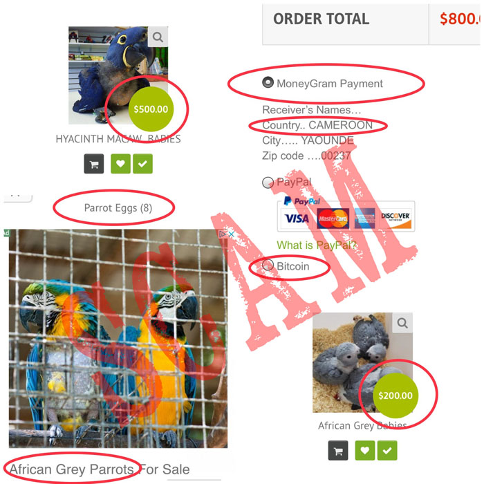 Signs of Common Parrot Scams Online