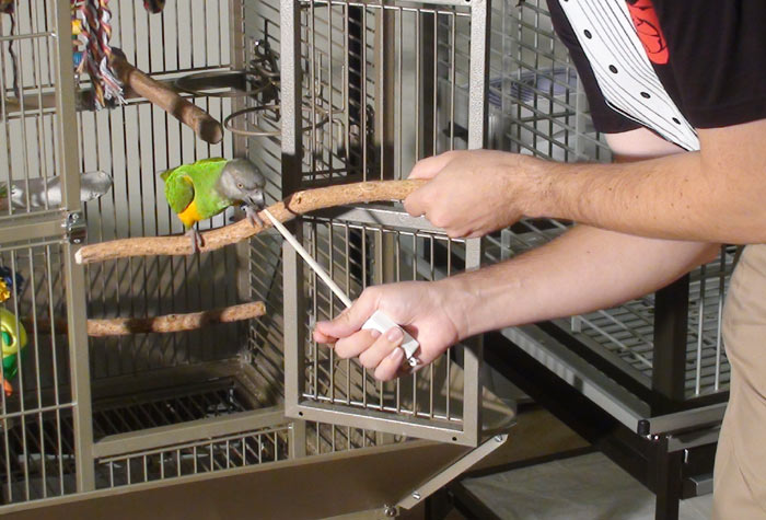 Target Parrot from Cage