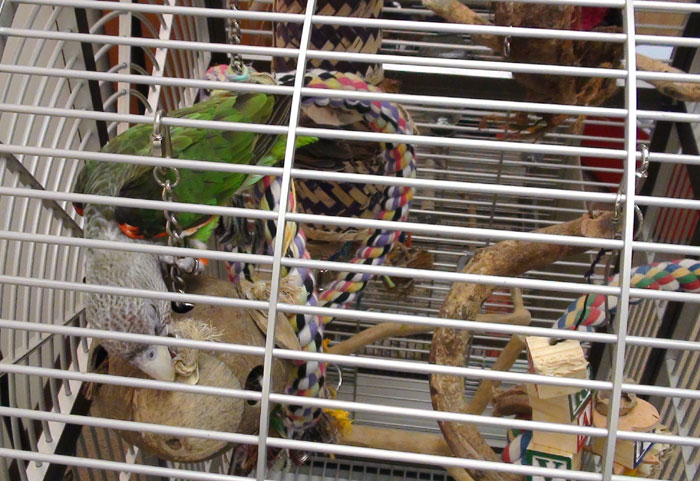 Cape Parrot Foraging Toy