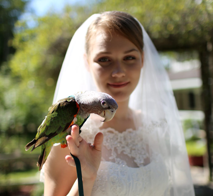 Bride with Cape Parrot