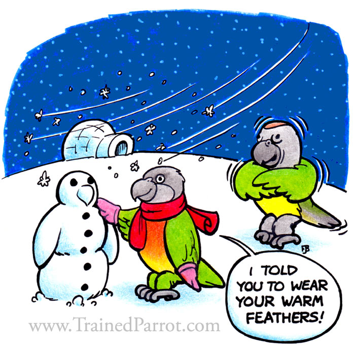 Winter Parrots Cartoon