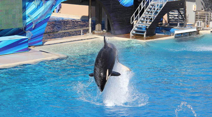 Sea World Orca Photo